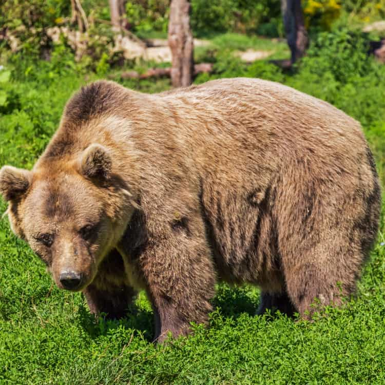 A true (and very sad) story about Betty the Bear